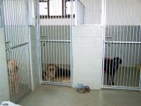 Internal hotel kennels