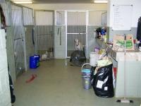 Inside kennels