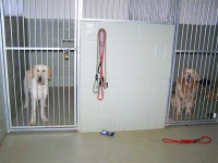 More inside kennels