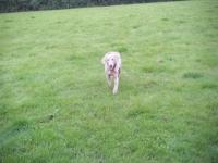 keo running in the paddock