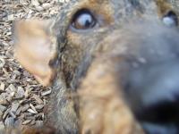 Hester closeup!