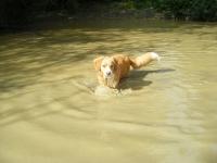 Sukie going for a swim