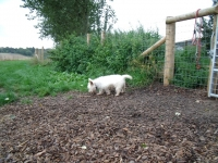 Henry plodding about!
