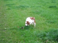 Holly sniffing about!