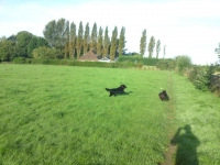 Jet and Maisie having fun on a walk!