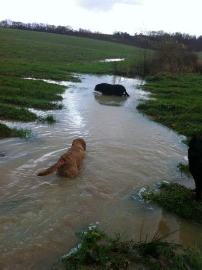 Its been a wet winter....water water everywhere!!