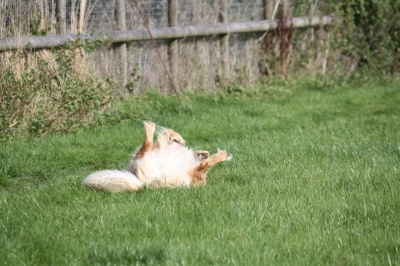 Frazer, having a good old roll!!