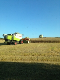 Combining oil seed rape which will be sold then crushed and then made in to cooking oil