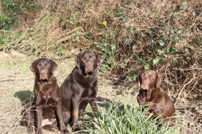 Lexi brown, son Laeto and Laeto\'s half sister Rosezee, they have the same dad, Bailey (Lightbringer one fine day)