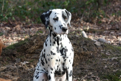 The gorgeous spotty dog..Ladybug!
