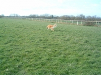 Frazer trying to find something green, although no one has actually told him that dogs are colour blind.