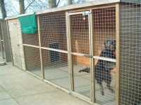 Misty thinks she has finally worked out how to drive the kennels with her invisible steering wheel.