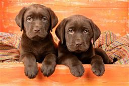 Puppies looking out