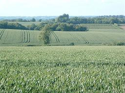 A view of Benedict Farm fields