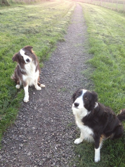Ruby and Cosmo love coming to stay with us, they love to run in our paddocks.