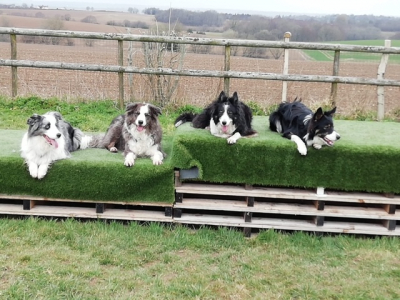 These gorgeous collies are so well behaved, they love it here and also board with us regularly at the kennels. Here they are doing a fabulous down stay on the pallets, another activity at our fun secure activity dog exercise field