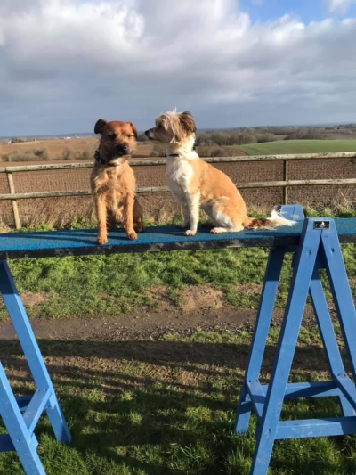 These two have a great view from the top of the dog walk, watching whats going down! It was a beautiful cold morning here at Benedict Farm Boarding kennels secure fun activity exercise field. It certainly didn't stop these two enjoy themselves.